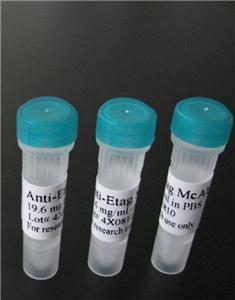 赖氨酸琼脂糖微球4B