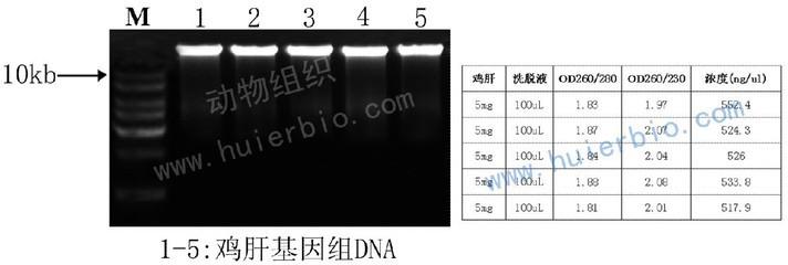 Beadlyte? Mouse 21-Plex Cytokine Detection System