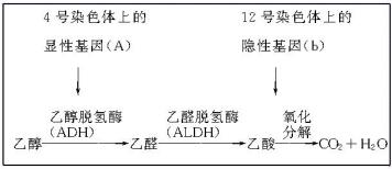 植物血球凝集素-P PHA-P