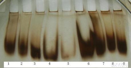 UPN-蛋白质负染试剂盒.