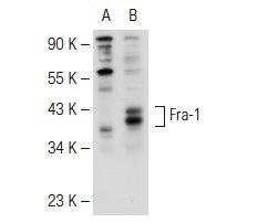 H2N-PEG6-CH2CH2NH2
