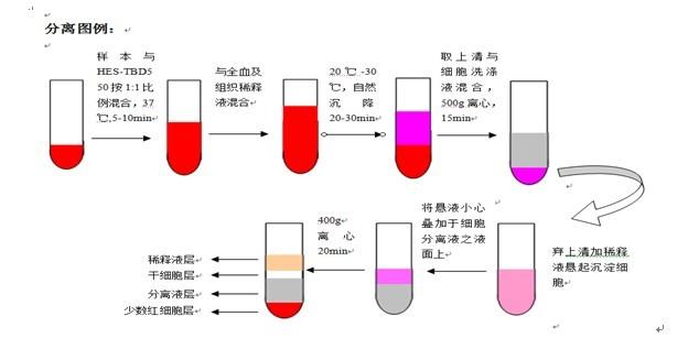 马脏器组织NK细胞分离液试剂盒