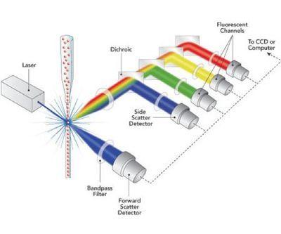 PeproTech Human IP-10 (CXCL10) Mini TMB ELISA Development Kit