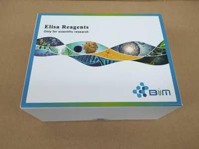 Lumi-Glow 双荧光素酶检测试剂盒