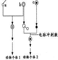 细胞核染料DAPI