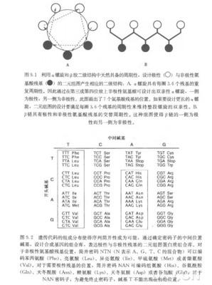 L-本丙氨酸;L-Phenylalanine;63-91-2