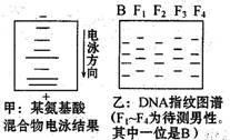L-甲硫氨酸