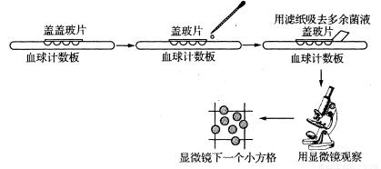 酵母缺陷型培养基 SD-Trp-Leu