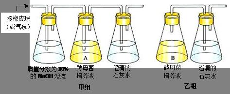 酵母缺陷型培养基  SD-Leu