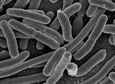 人骨髓间充质干细胞 无血清培养基