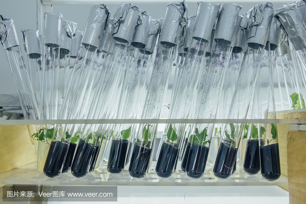 干细胞温和消化酶