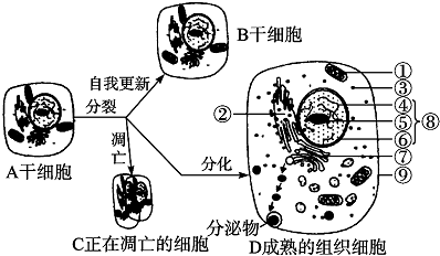 Leukemia Inhibitory Factor, recombinant mouse