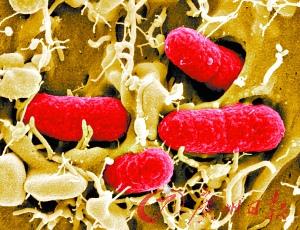 重组人白细胞介素-1β