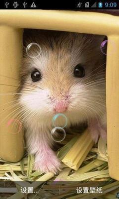 小鼠干扰素-b (mouse IFN-b)