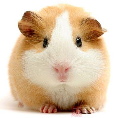 小鼠干细胞生长因子(mouse SCF)