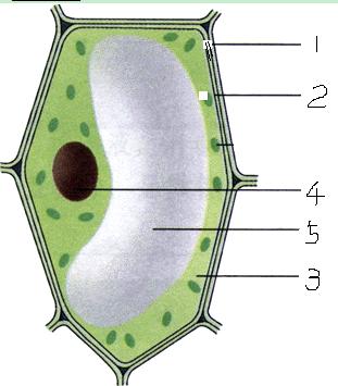 美国caisson labs-PTP01植物凝胶