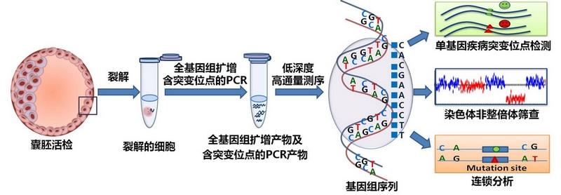 β-地中海贫血基因检测试剂盒