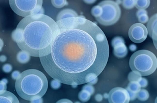 细菌性阴道病(BV)快速检测试剂盒