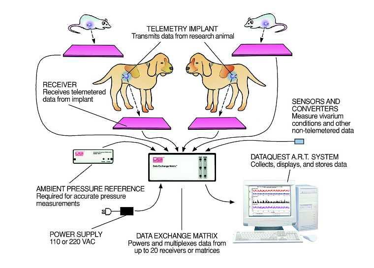 DSI清醒动物植入式生理信号测量分析系统