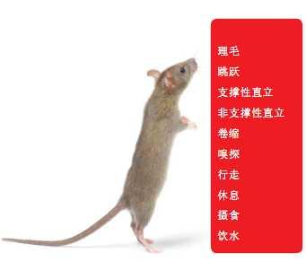 鼠类精细行为自动识别软件