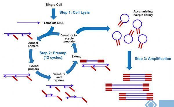 单细胞全基因组扩增试剂盒 WGA 单细胞全基因组扩增试剂盒