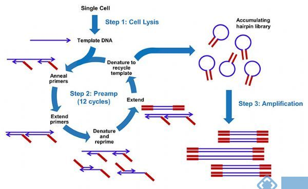 MALBAC技术与Rubicon单细胞全基因组扩增试剂盒介绍