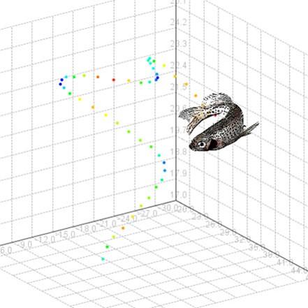 鱼类空间观察软件