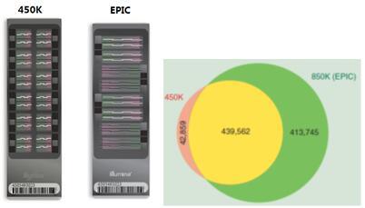 dna甲基化芯片