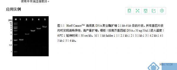高保真DNA聚合酶