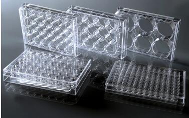 NEST细胞培养板