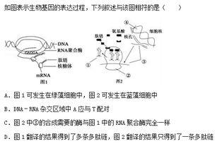 生产规模DNA/RNA合成系统 Oligoprocess