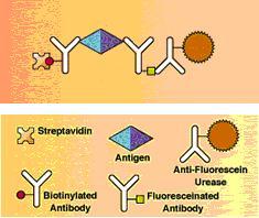 Threshold免疫分析试剂盒  Molecular Devices