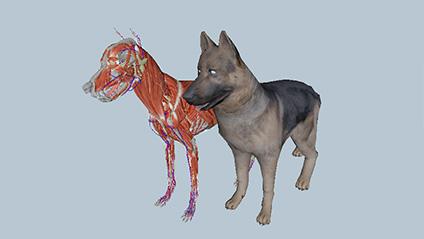 虚拟动物三维解剖