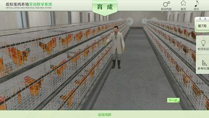 蛋鸡养殖虚拟实训