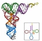 small RNA 测序