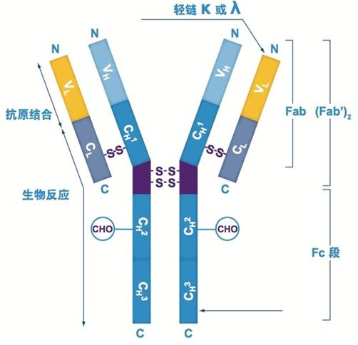 59天快速单克隆抗体细胞株制备服务
