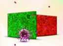 细胞转染|慢病毒转染|稳定细胞株构建|稳定细胞系