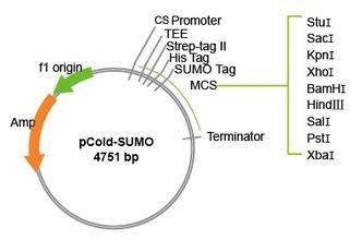 (原核)可溶蛋白表达实验服务