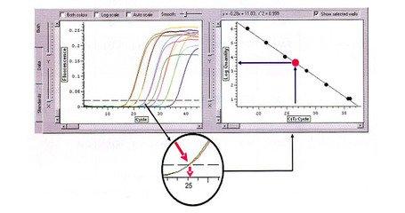 LncRNA实时定量PCR实验外包服务
