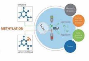 DNA甲基化测序实验外包服务