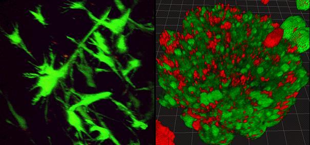 三维细胞培养(灌注)