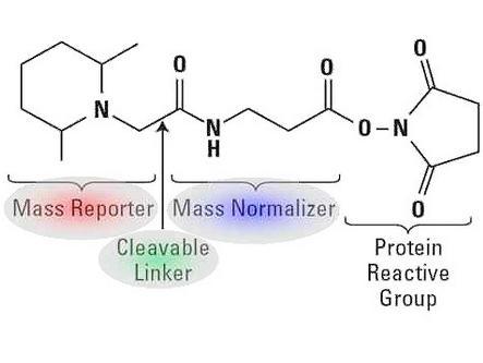 SILAC(Western-blot实验服务、蛋白纯化、多肽合成、单克隆抗体制备、多克隆抗体制备、蛋白双向电泳实验服务、质谱分析、原核蛋白表达、真核蛋白表达、iTRAQ定量蛋白质组学、SILAC蛋白组学等)     威斯腾生物,让科研更简单!