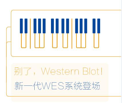 WES 自动化蛋白质分析服务