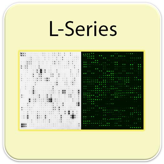 大鼠抗体芯片可检测90个蛋白 Rat L90 Array, Glass Slide (AAR-BLG-1)