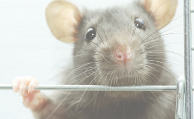 动物模型基因编辑