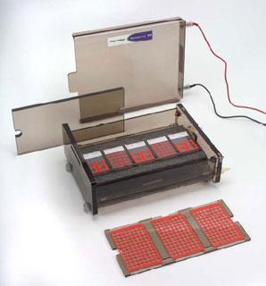 CometAssay® Electrophoresis System