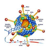Easy-vshRNA腺病毒产品