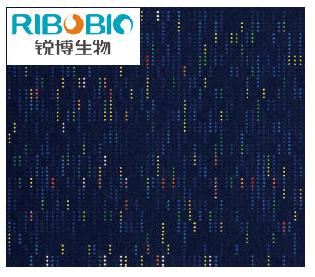 miRNA表达谱芯片
