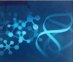 3'UTR报告基因系统