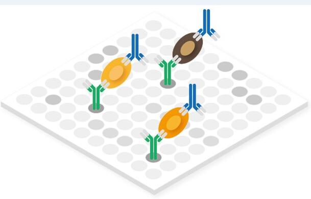 抗体芯片检测服务